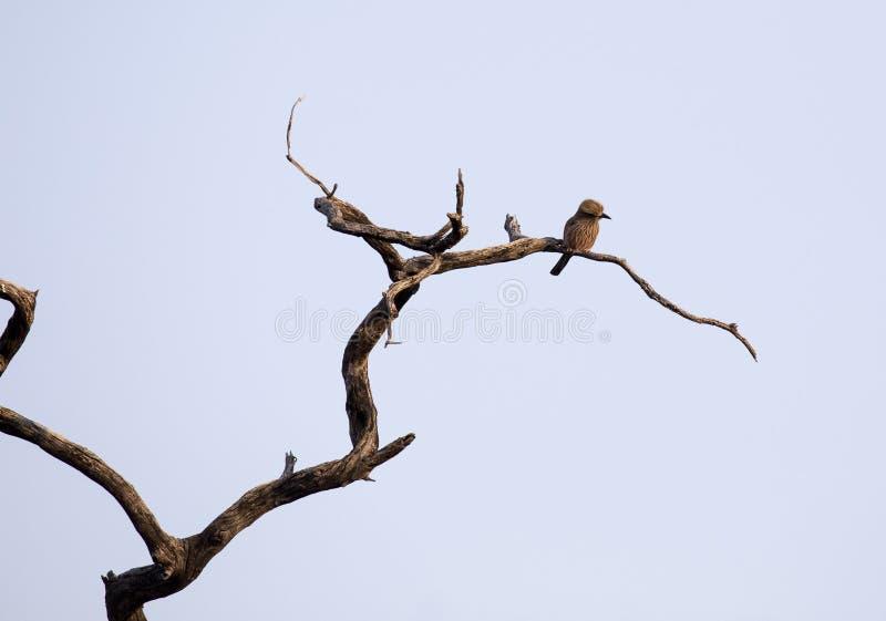 Oiseau non identifié sur un arbre images stock