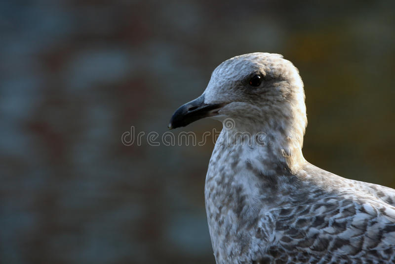 Oiseau par la rive image stock