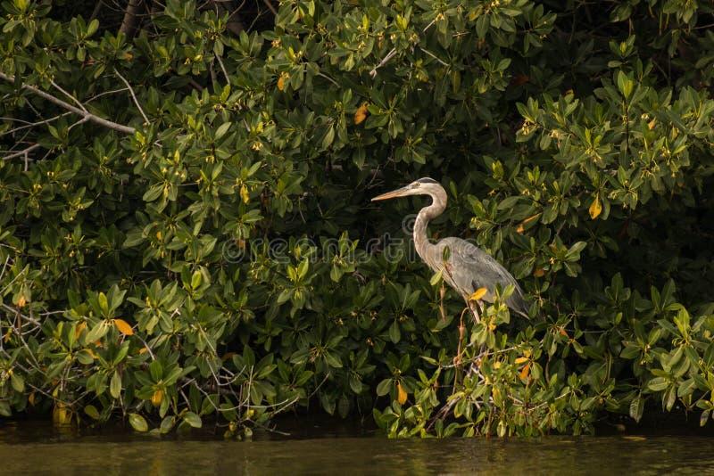 Oiseau par la rivière photos libres de droits