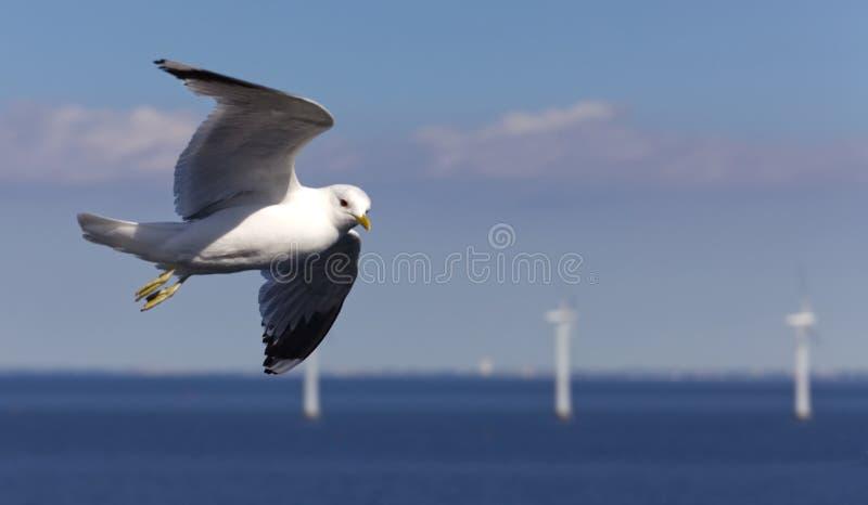 Oiseau parfait dans le vol libre photos libres de droits