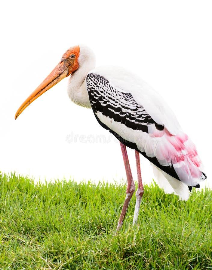 Oiseau peint de cigogne photos libres de droits