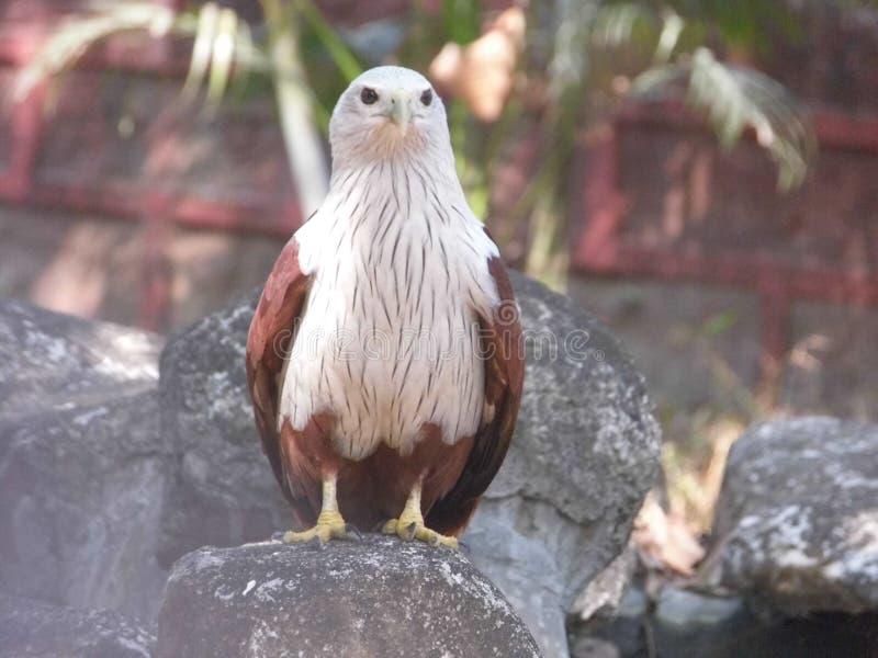 Oiseau pensant photographie stock libre de droits