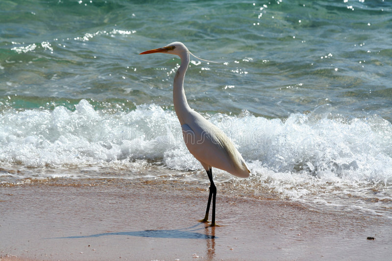 Oiseau près de la mer images stock