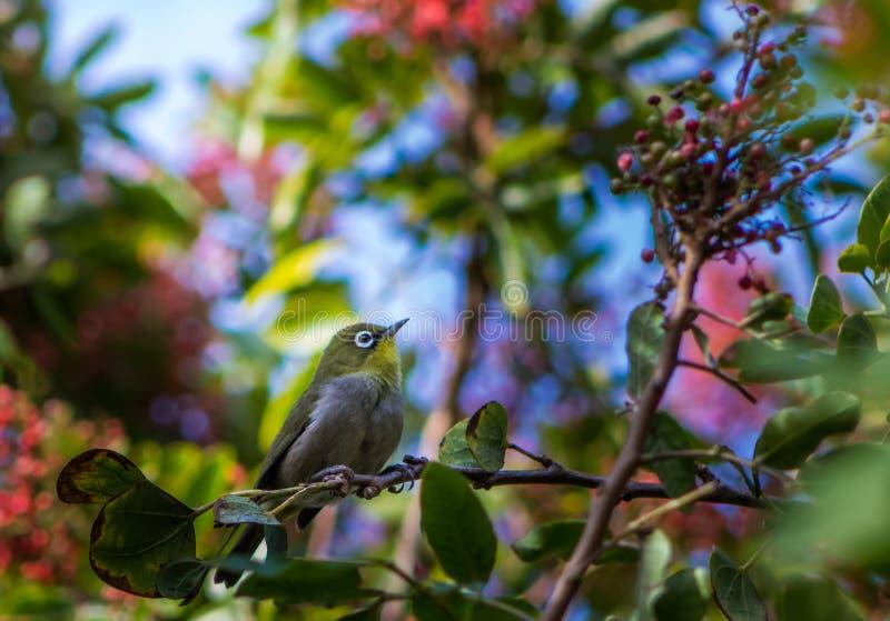 Oiseau recherchant la nourriture photo stock