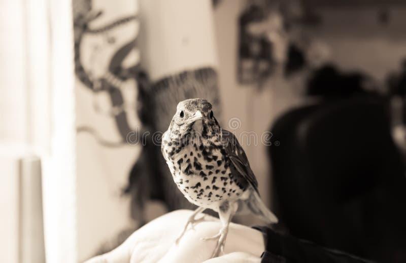 Oiseau se reposant sur une main humaine photo libre de droits