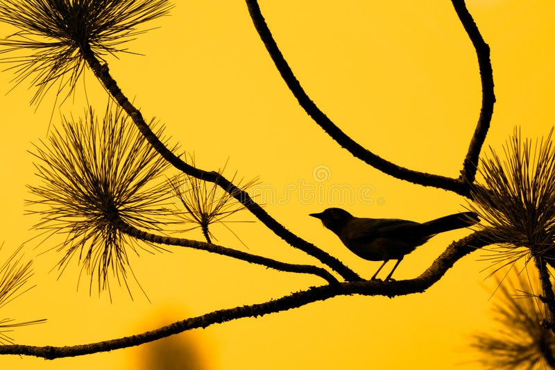 Silhouette d'oiseau contre le ciel orange image stock