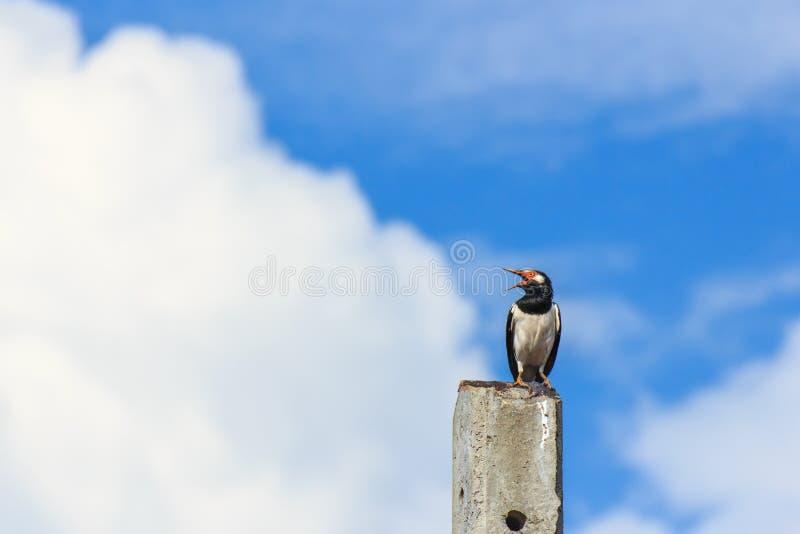 Oiseau seul se reposant sur le poteau concret photographie stock