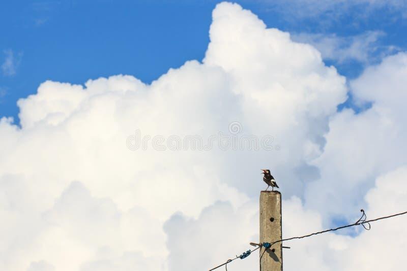 Oiseau seul se reposant sur le poteau concret photo libre de droits