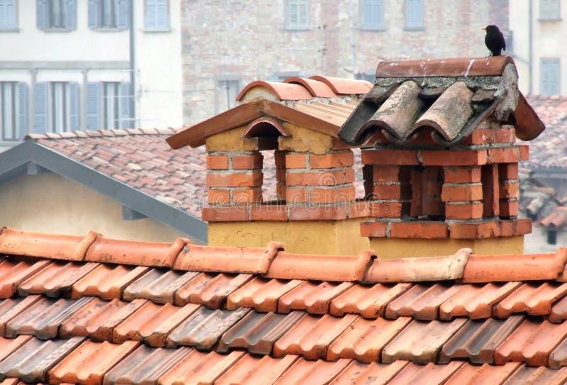 Oiseau seul sur des cheminées images stock