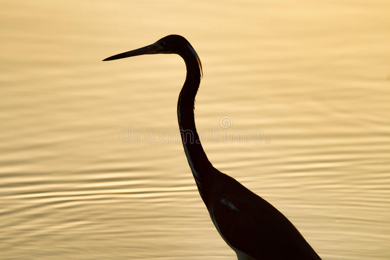 Oiseau silhouetté au coucher du soleil image stock