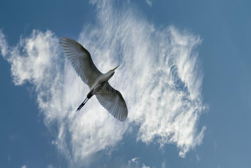 Oiseau solitaire unique et ciel nuageux coloré images libres de droits