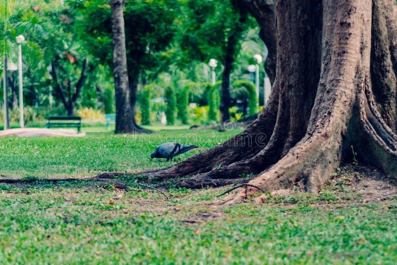 Oiseau sous l'arbre image libre de droits