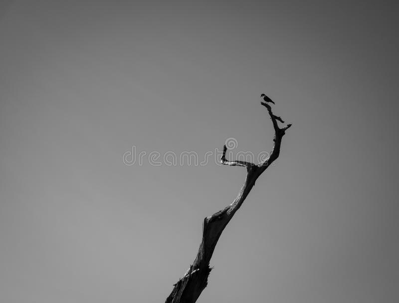 Oiseau supérieur image libre de droits