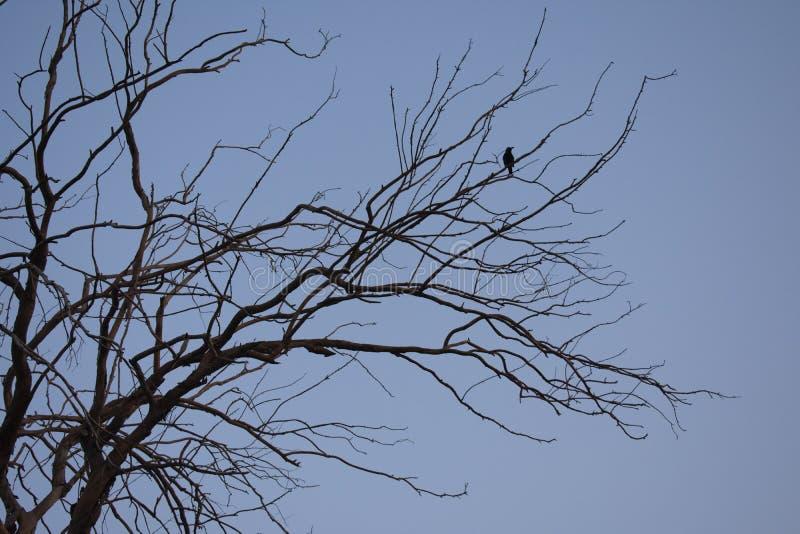 Oiseau sur l'arbre photos stock
