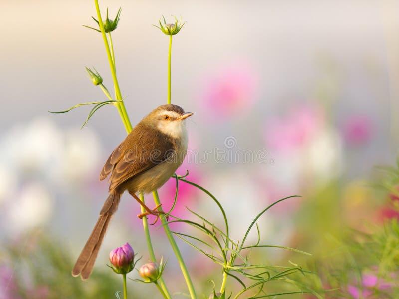 Oiseau sur la fleur dans le jardin photo libre de droits