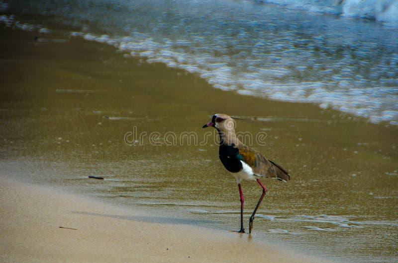 Oiseau sur la plage photo libre de droits