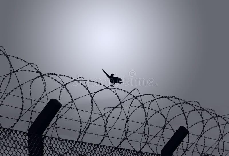 Oiseau sur le barbelé photographie stock