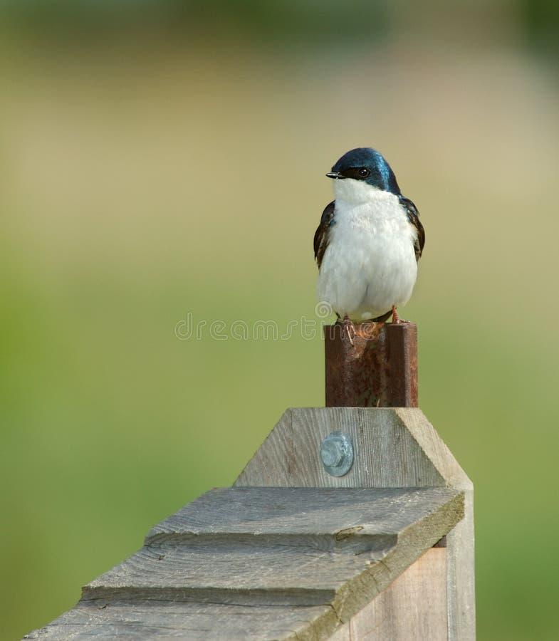Oiseau sur le Birdhouse photographie stock libre de droits
