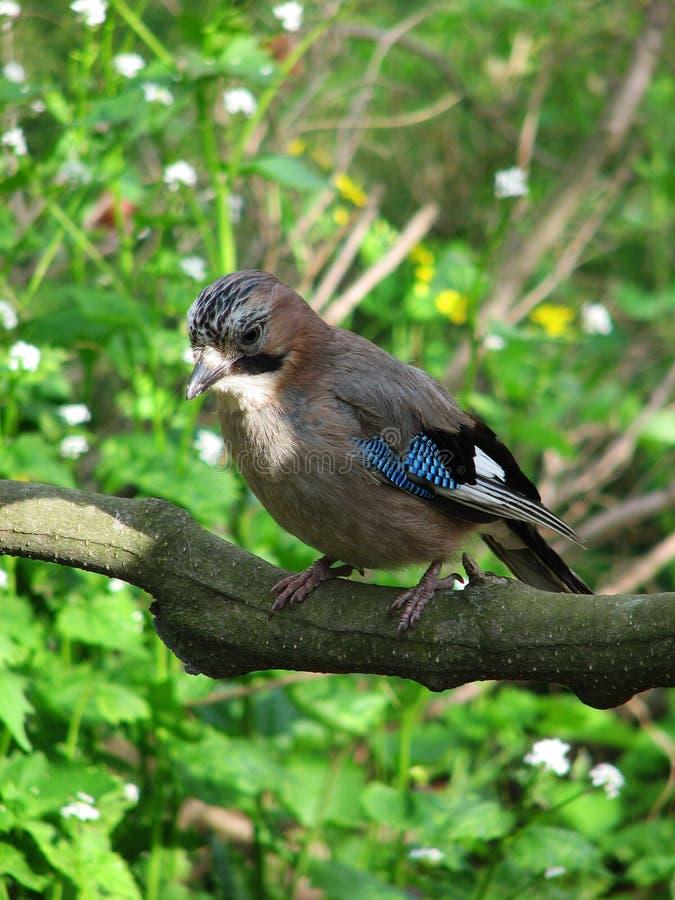 Oiseau sur le branchement d'arbre photo stock