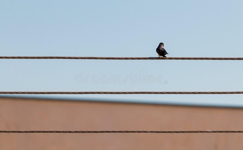 Oiseau sur le fil léger images stock