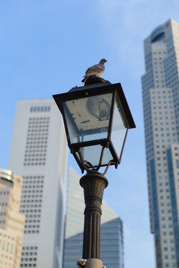 Oiseau sur le réverbère à l'arrière-plan de gratte-ciel photographie stock