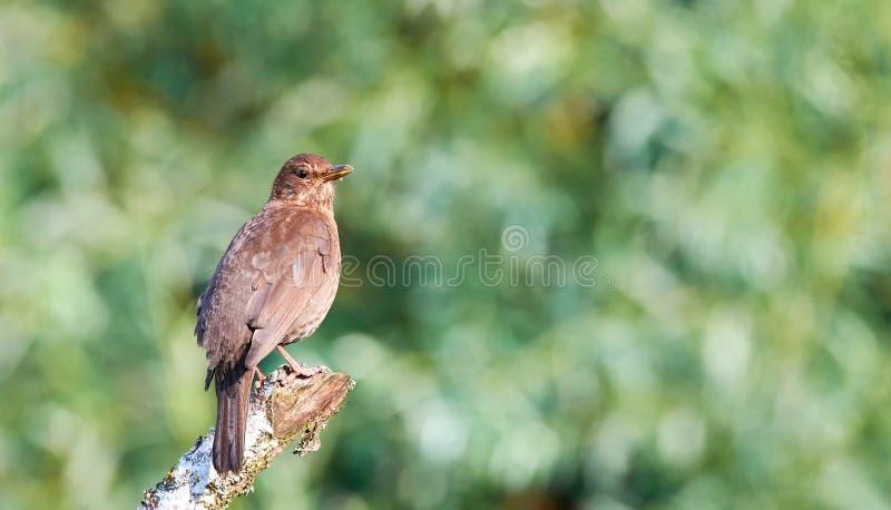 oiseau sur un champ vert dans le matin images stock