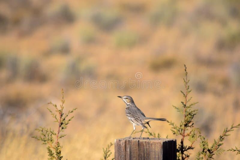 Oiseau sur un courrier dans un domaine images stock