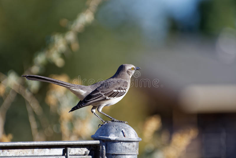 Oiseau sur un courrier de barrière image stock