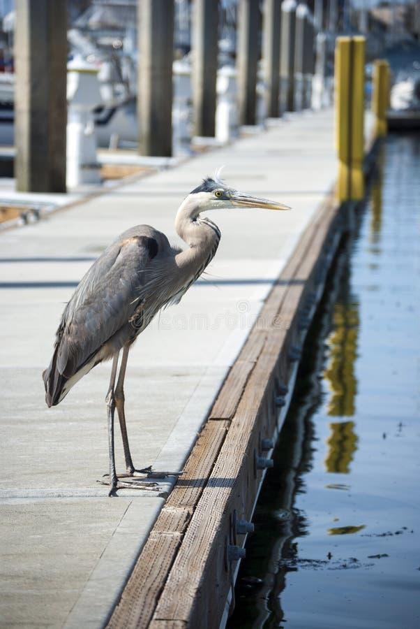 Oiseau sur un dock images libres de droits
