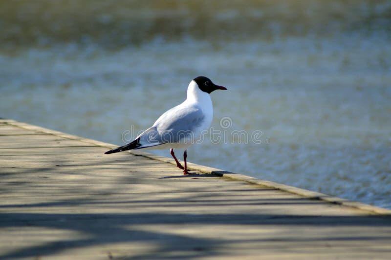 Oiseau sur un pair image stock