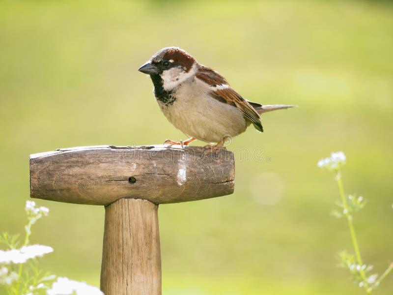 Oiseau sur un traitement de fourchette photos libres de droits