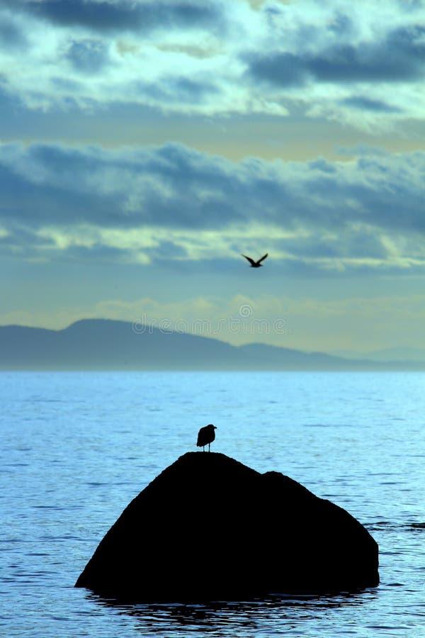 Oiseau sur une roche photographie stock