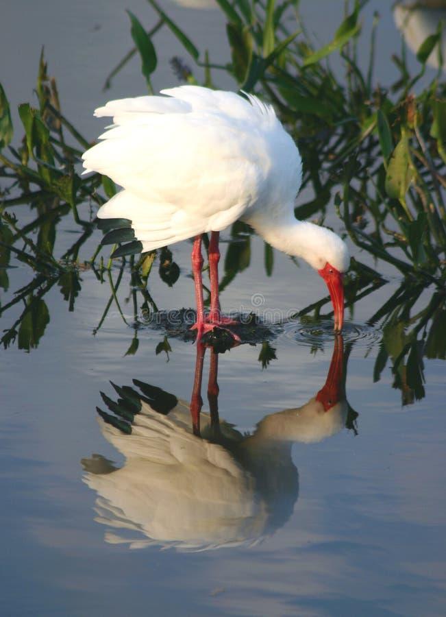 Oiseau tropical 2 photos libres de droits