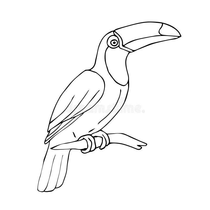 Oiseau tropical de toucan de croquis tiré par la main de vecteur illustration de vecteur