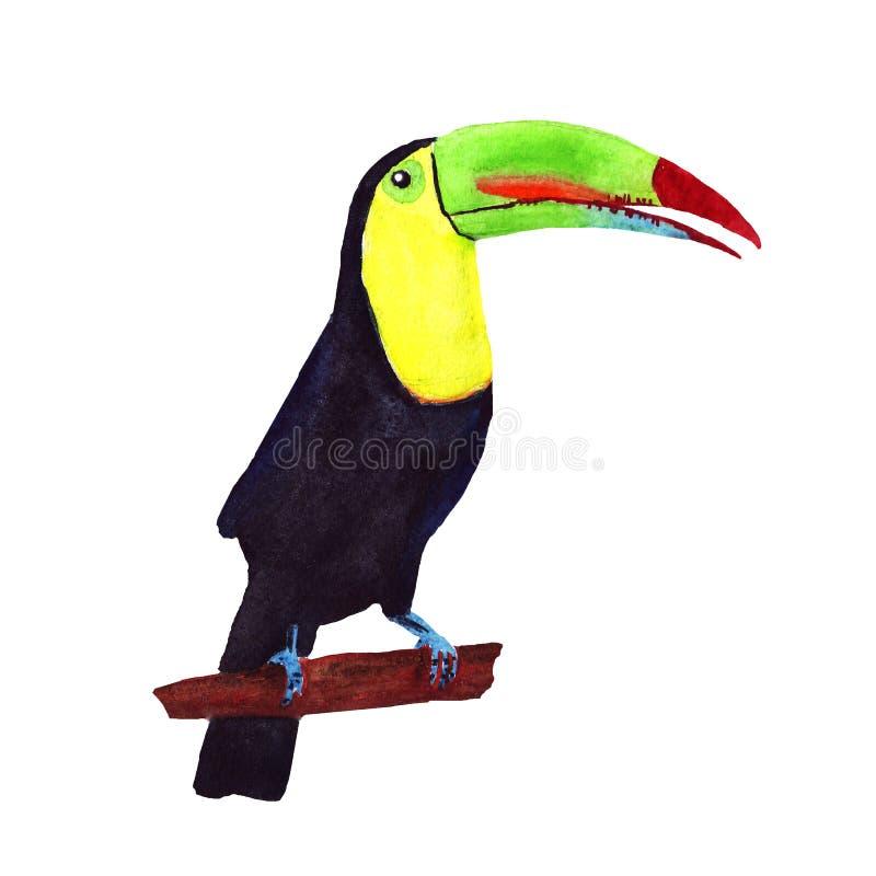 Oiseau tropical de toucan d'aquarelle d'isolement sur le blanc illustration stock