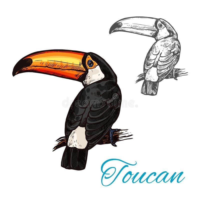 Oiseau tropical de toucan se reposant sur le croquis de branche illustration de vecteur