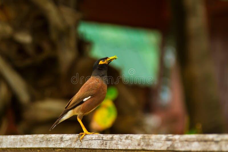 Oiseau végétarien image libre de droits