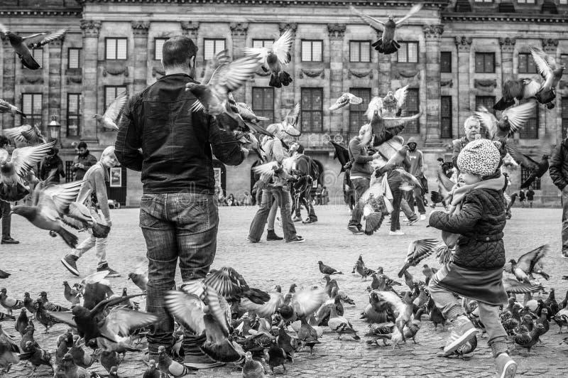 Oiseaux à Amsterdam photographie stock