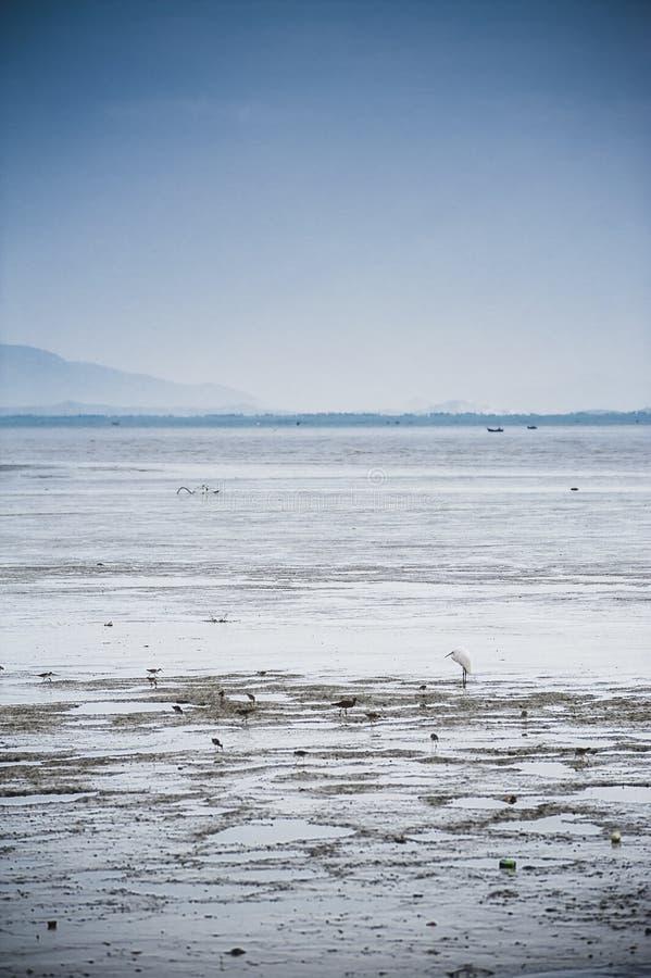 Oiseaux à la plage sur la marée basse photo stock