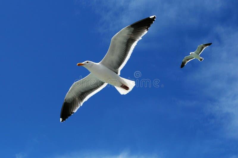Oiseaux photo stock