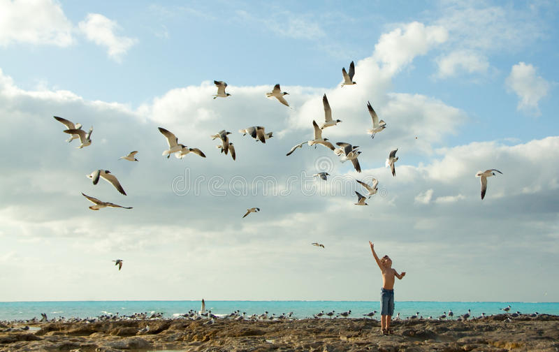 Oiseaux alimentants de garçon photographie stock
