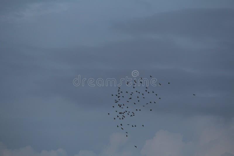 Oiseaux allants à la maison image libre de droits