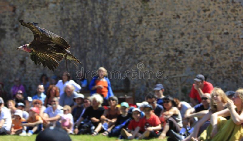 Oiseaux apprivoisant l'exposition photo libre de droits