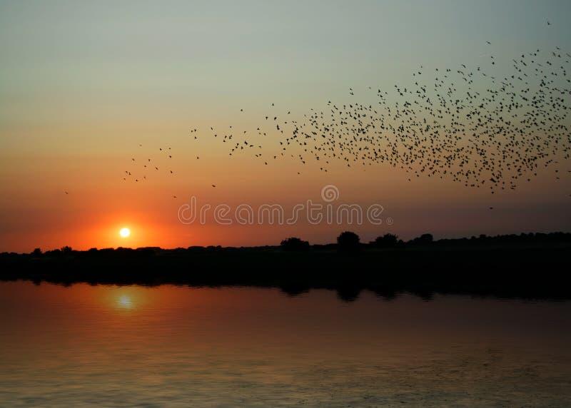 Oiseaux au coucher du soleil photographie stock libre de droits
