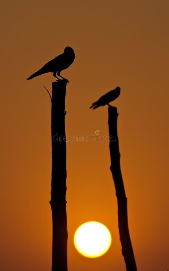 Oiseaux au coucher du soleil photo libre de droits