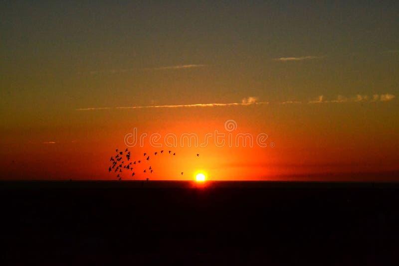Oiseaux au coucher du soleil Le Trinidad, Cuba photographie stock libre de droits