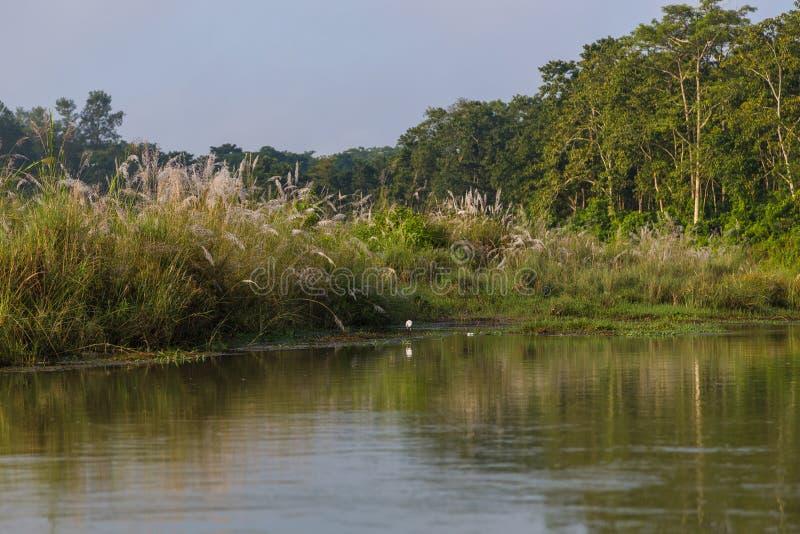 Oiseaux au-dessus de la rivière de Rapti dans Chitwan, Népal images stock