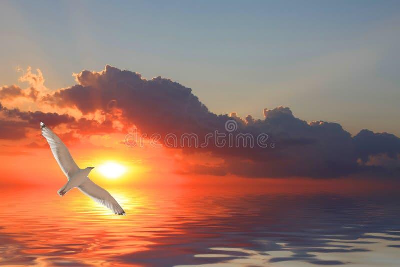 Oiseaux au-dessus de mer photo libre de droits