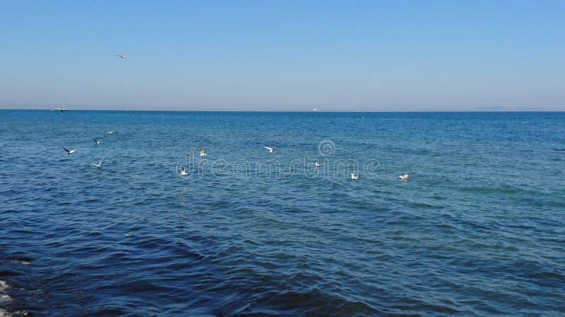 Oiseaux au-dessus de mer photo stock