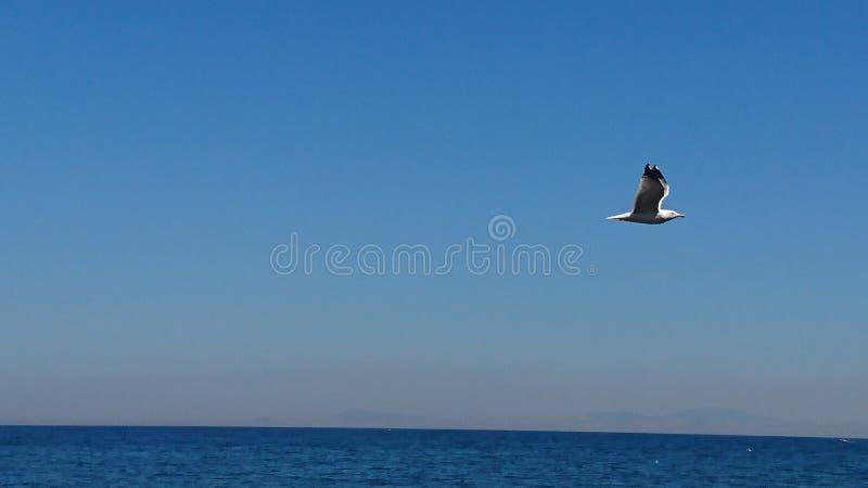 Oiseaux au-dessus de mer photographie stock